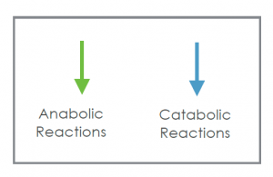 anabolic-catabolic